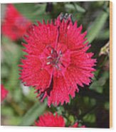 Red Winery Flower Wood Print