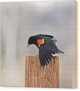 Red Wing Black Bird On Post Wood Print