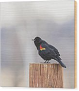Red Wing Black Bird On Post II Wood Print
