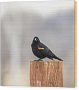 Red Wing Black Bird On Post IIi Wood Print
