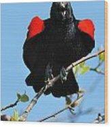 Red Wing Blackbird 1 Wood Print