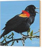 Red Wing Blackbird 2 Wood Print