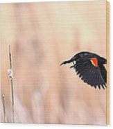 Red-wing Blackbird In Flight Wood Print