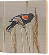 Red-wing Blackbird Wood Print
