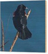 Red Winged Black Bird Wood Print
