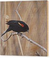 Red Winged Blackbird 1 Wood Print by Ernie Echols