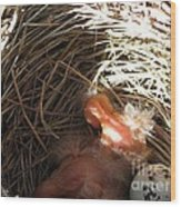 Red-winged Blackbird Babies And Egg Wood Print by J McCombie