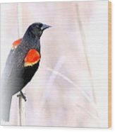 Red-winged Blackbird - Colors Wood Print
