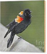 Red-winged Blackbird Display Wood Print