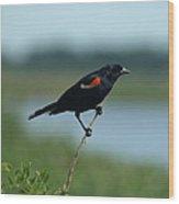 Red-winged Blackbird Landscape Wood Print