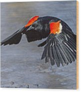 Red Winged Blackbird Wood Print