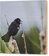Red Winged Blackbird Singing Wood Print
