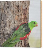 Red-winged Parrot Wood Print