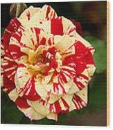 Red Yellow Rose Wood Print