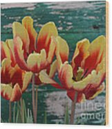 Red Yellow Tulips Wood Print