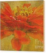 Red Zinnia Essence Wood Print