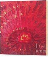 Red Zinnia Wood Print