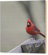 Redbird Wood Print