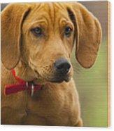 Redbone Coonhound - Man's Best Friend The Hound Dog Wood Print