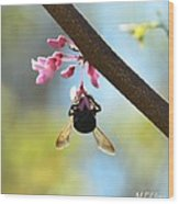 Redbud And The Bumble Wood Print