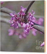 Redbud Blossom Wood Print