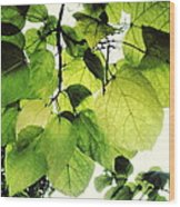 Catalpa Branch Wood Print