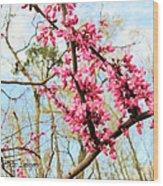 Redbud Buds Wood Print by Debbie Sikes
