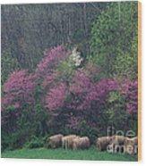 Redbud - Fm000095 Wood Print