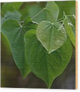 Redbud Hearts Wood Print