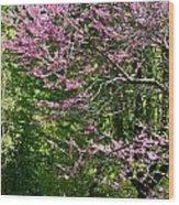 Redbud In The Woods Wood Print