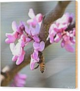 Redbud Pollinator Wood Print