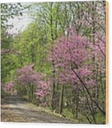 Redbud Road Wood Print