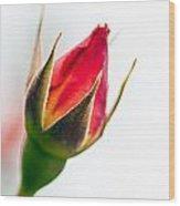 Redbud Wood Print