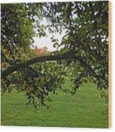 Redbud Tree In Autumn Wood Print