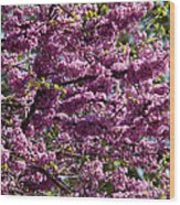 Redbud Tree In Blossom Wood Print