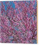 Redbud Tree With Dense Blossoms Wood Print