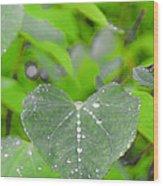 Redbud Water Droplets Wood Print