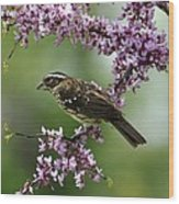 Redbud With Grosbeak Wood Print