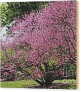 Redbuds In Action Wood Print