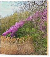 Redbuds In Bloom Wood Print