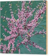 Redbuds Over San Antonio River Wood Print