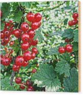 Redcurrant Berries Wood Print