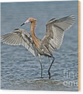 Reddish Egret Fishing Wood Print