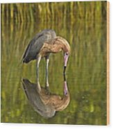 Reddish Egret Reflection Wood Print
