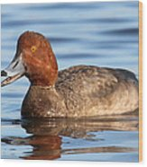 Redhead Duck At St. Mark's Wood Print