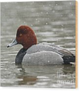 Redhead Duck In A Winter Snow Storm Wood Print