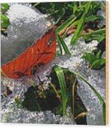 Redleafgrasscomp 2009 Wood Print
