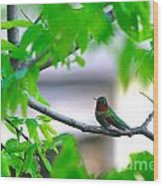 Redneck Humming Bird Wood Print