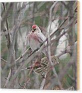 Redpoll And Pine Siskin Wood Print
