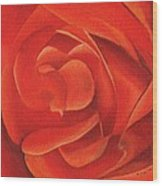Redrose14-1 Wood Print by William Killen